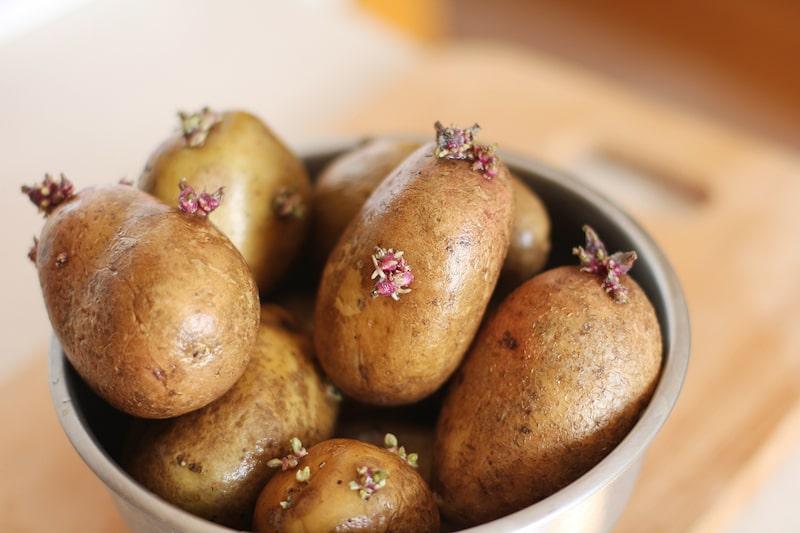 Kartoffeln pflanzen anbauen vorkeimen