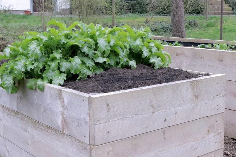 selbstversorgergarten gemüse anbauen hochbeet
