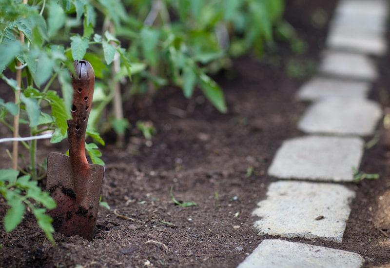 Tomaten pflanzen Gewächshaus