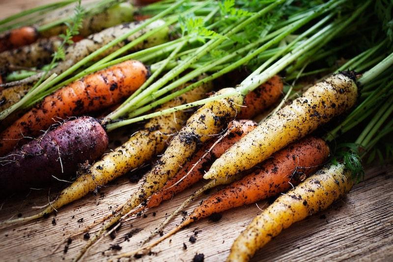 Karotten Gemüse anbauen Winter