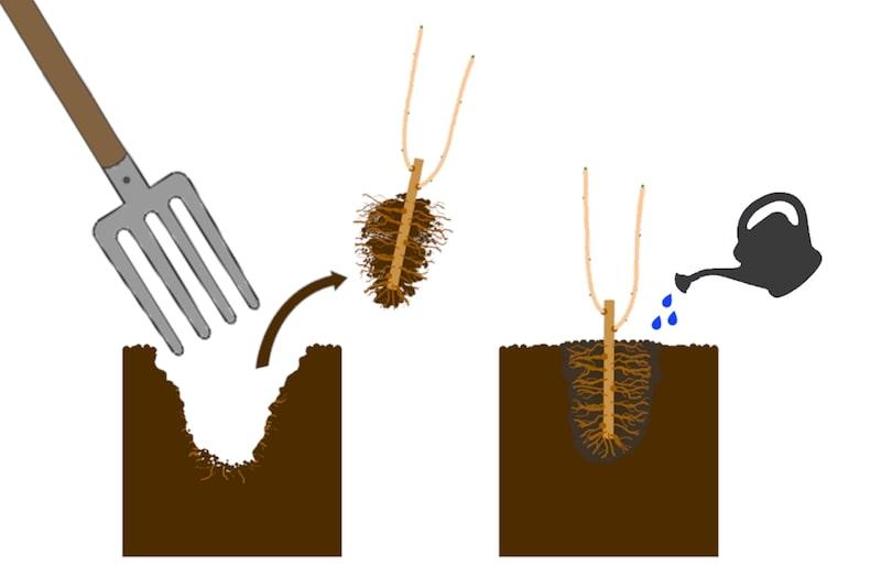 Johannisbeeren vermehren