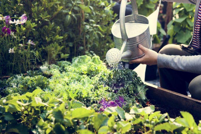 Hochbeet mit Gemüse bepflanzen