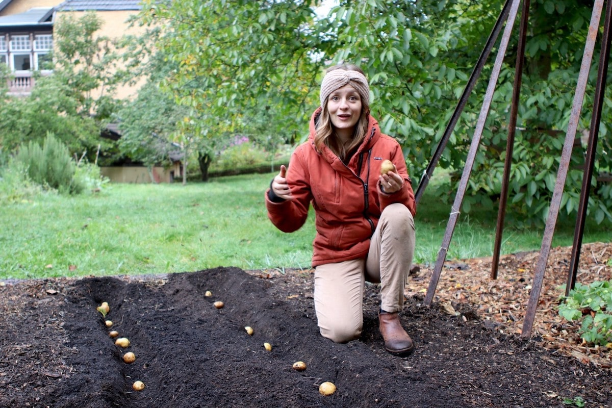 Kartoffeln im Winter pflanzen