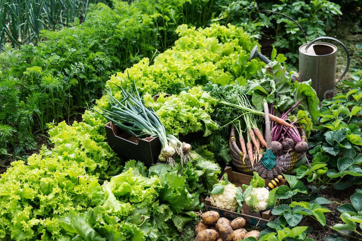 Anbauplan Gemüse PDF