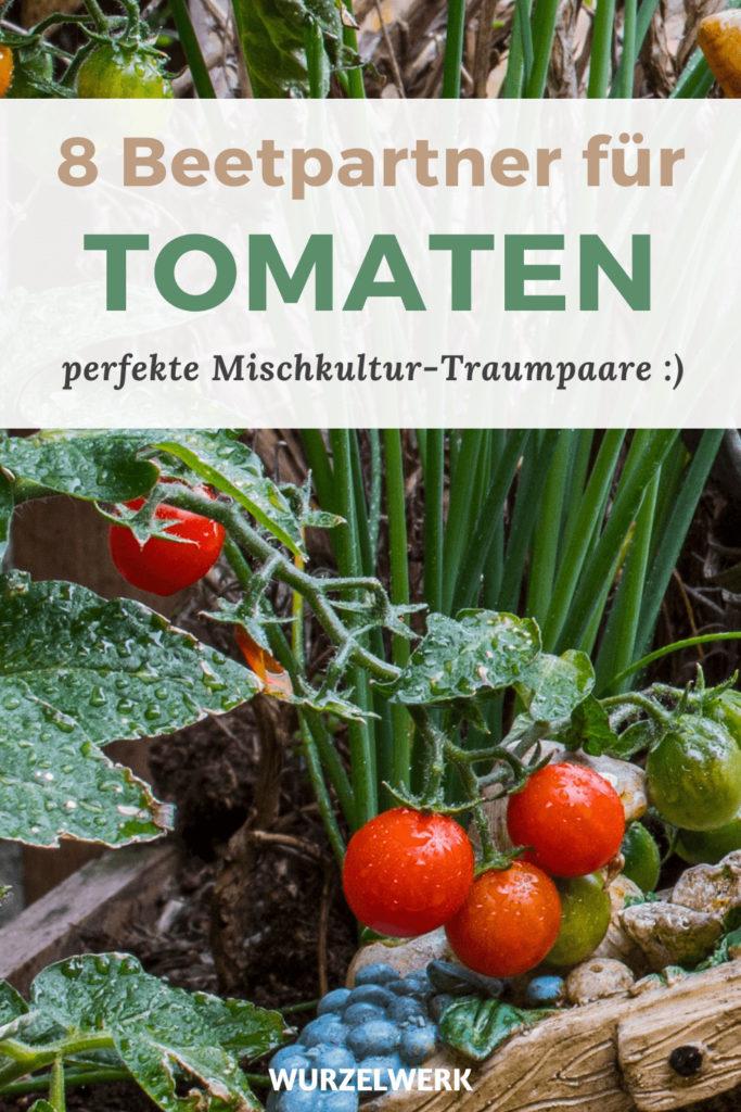 Mischkultur-Partner-Tomaten