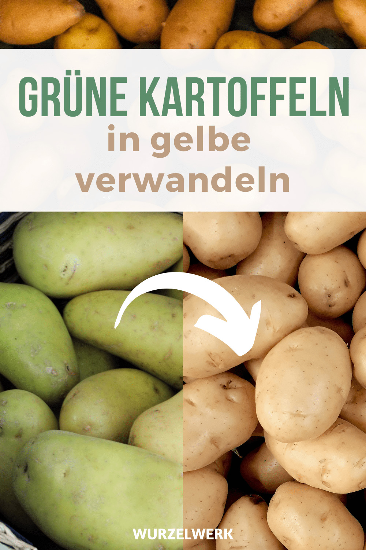 Grüne Kartoffeln verwandeln
