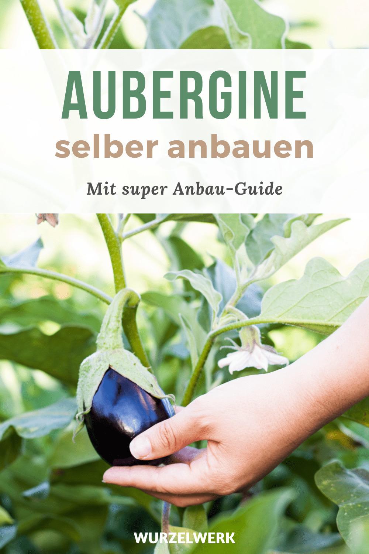 Aubergine-pflanzen-pin