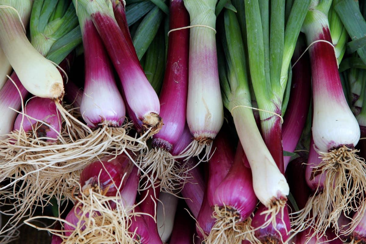 Frühlingszwiebeln Pflanzen Anbauen Und Ernten Die Ultimative Anleitung Wurzelwerk