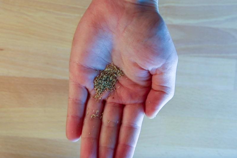 Kamillesamen in der Hand