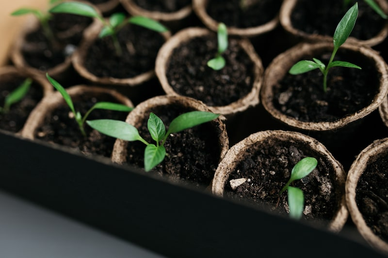 Jungpflanzen wachsen