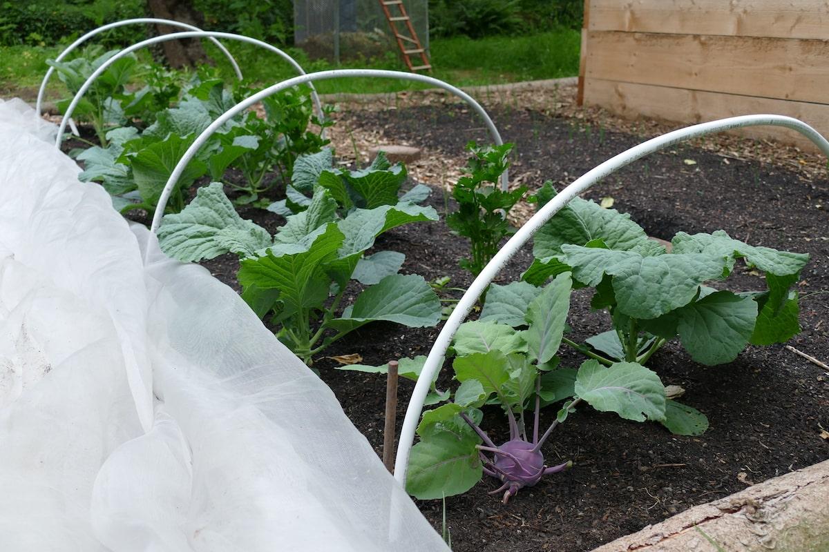 Gemüse_anbauen