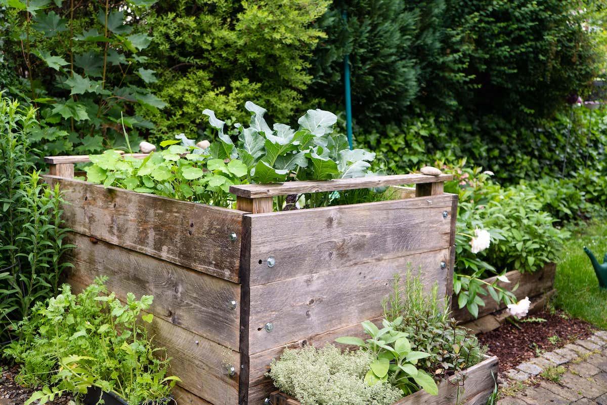 Gemüse_Hochbeet_im Garten