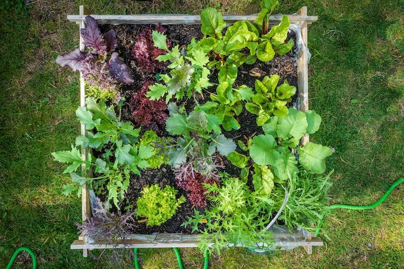 Gemüse_Hochbeet Draufsicht