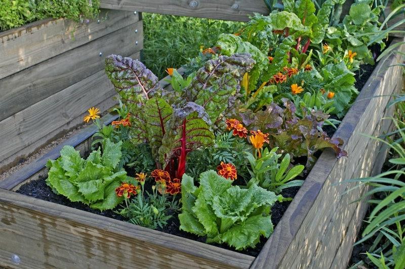 Gemüse in deinem Hochbeet