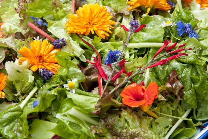 Blumen im Salat
