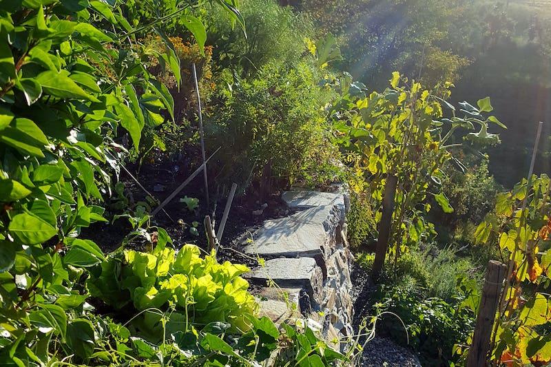 Garten in der Mittagssonne
