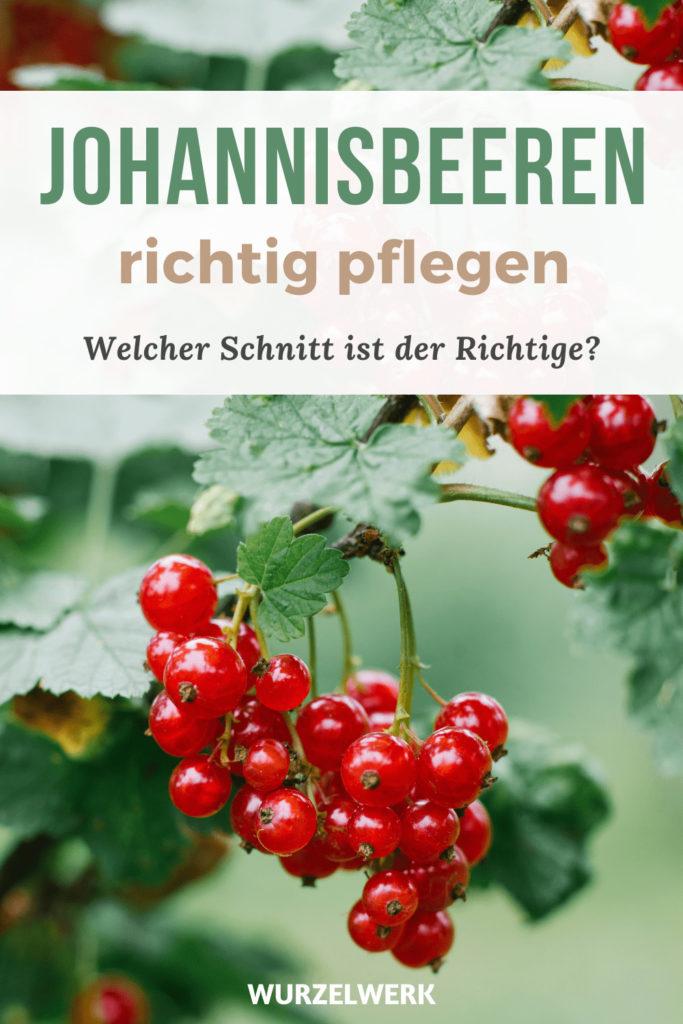 Johannisbeeren_schneiden_Pin