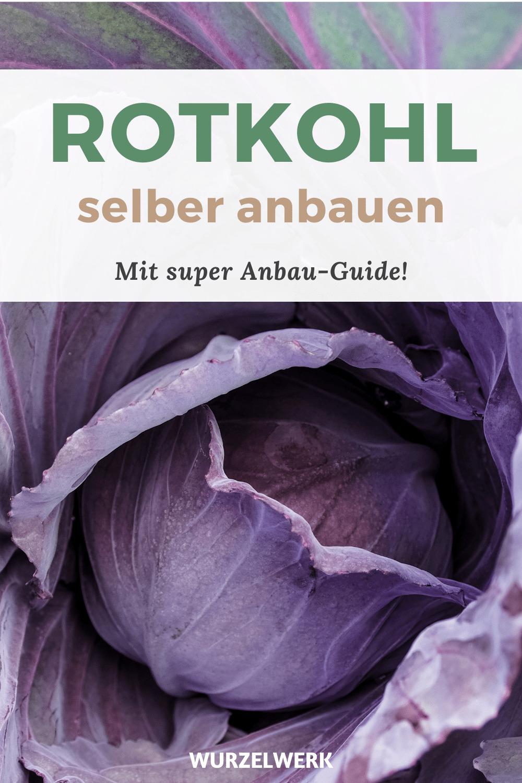 Rotkohl_Pflanzen_Pinterest_Pin