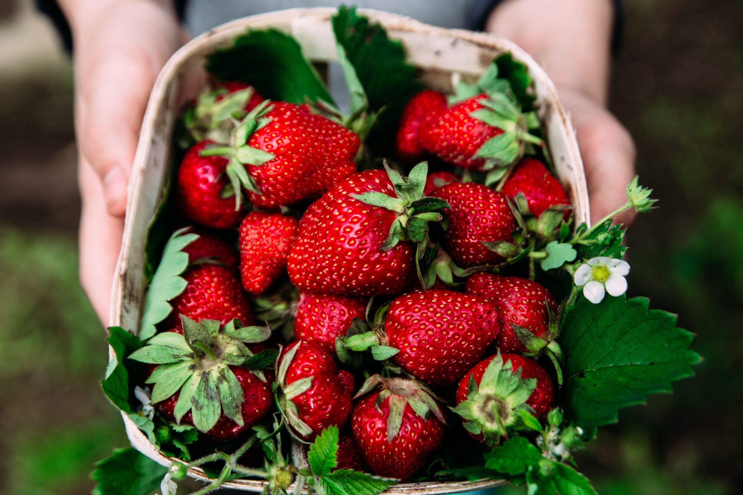 Erdbeeren-Schale