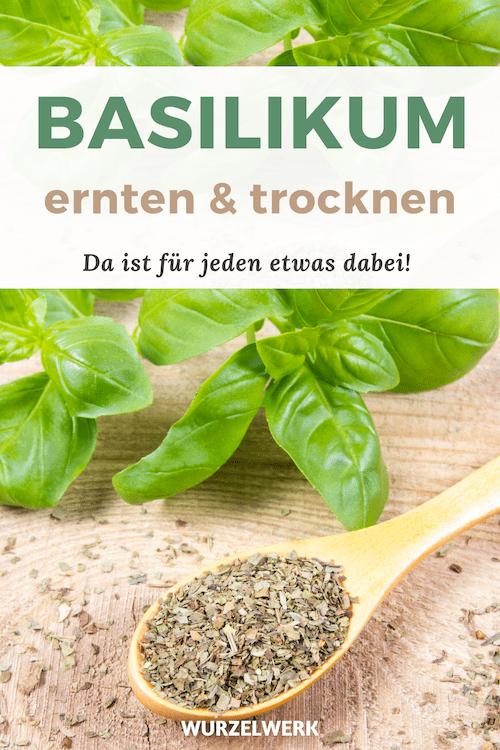 Basilikum Ernten und Trocknen Pinterest