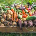 selbst_angebautes_Gemüse