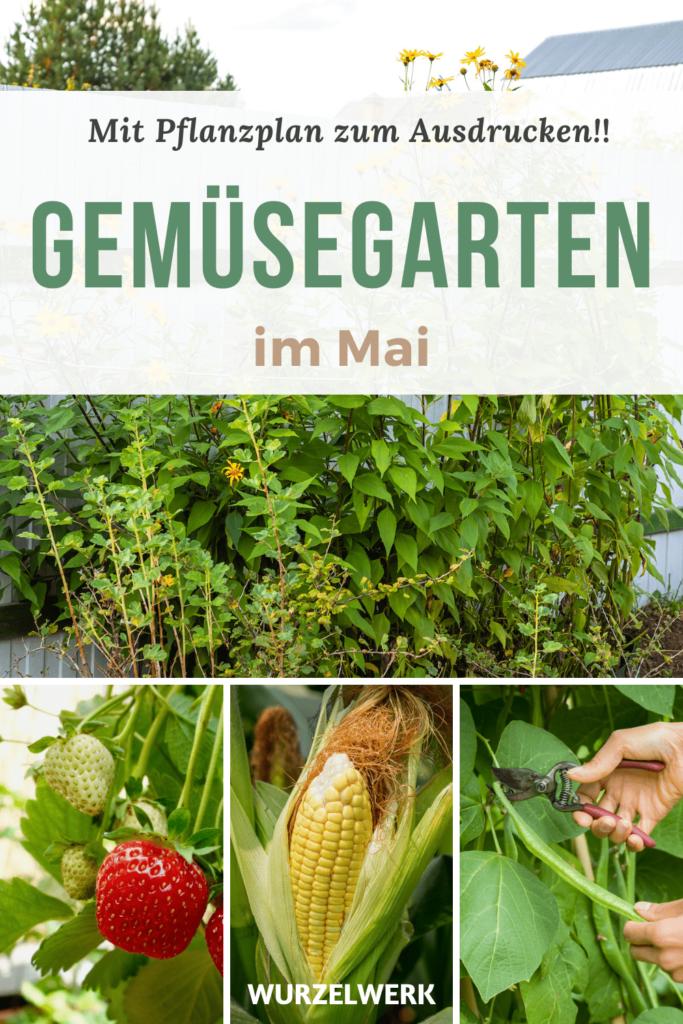 Aussaat und Pflanzen im Mai