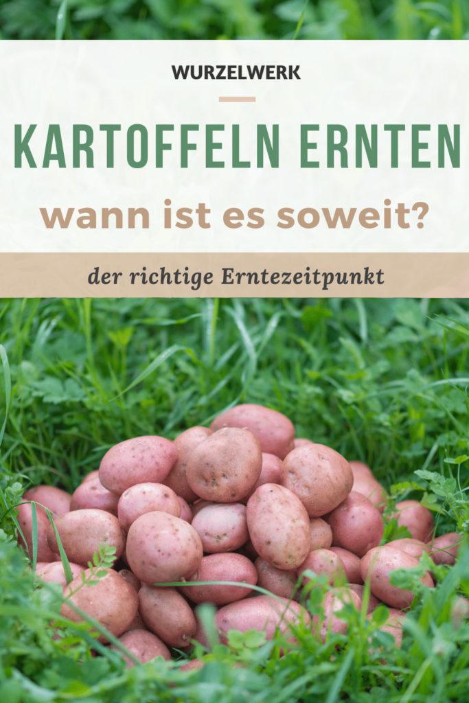 Pin Kartoffeln ernten