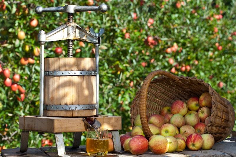 Äpfel mit der Obstpresse entsaften