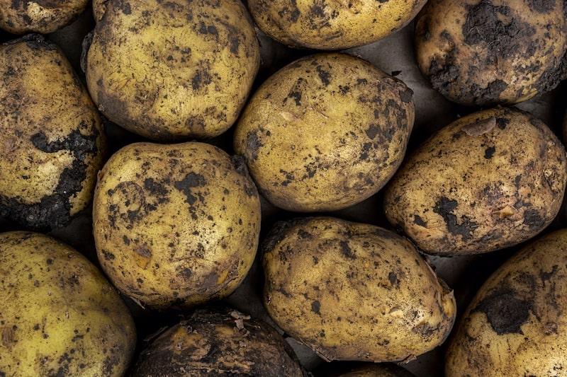 Lagern von erdigen Kartoffeln